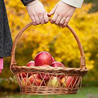 Saratoga County Apple Picking
