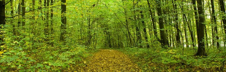 Forest of upstate New York