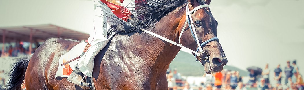 Close up of race horse