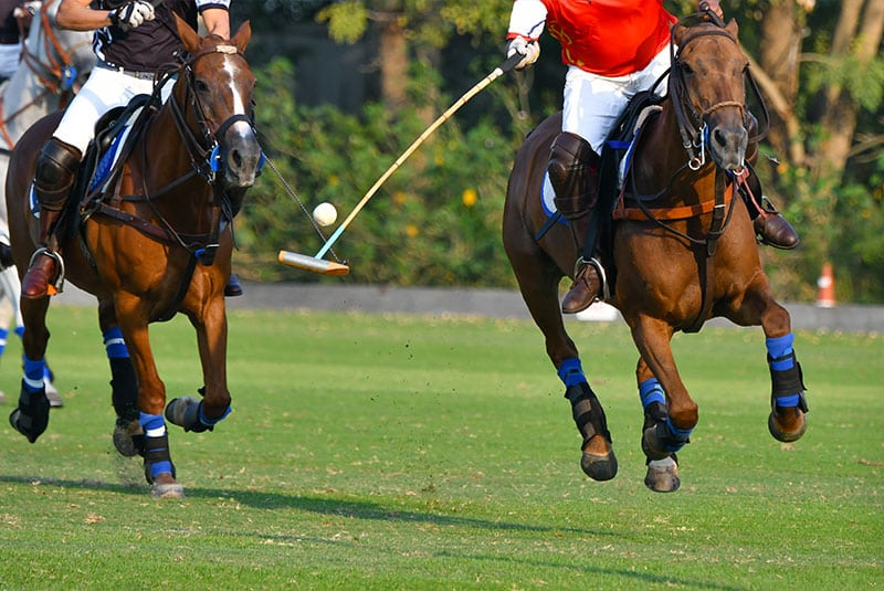 Summer activities in Saratoga Springs - Polo