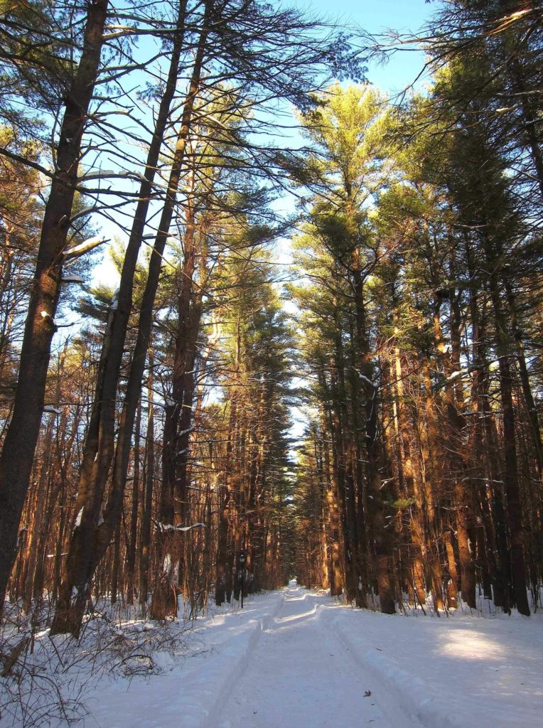 Winter walk at Saratoga Spa State Park